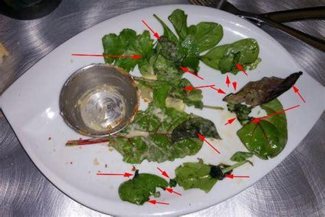 cuisine pourrie le petit pot de quot camenbert quot à la normande et sa salade