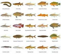 common freshwater fish identification inland fishes  md