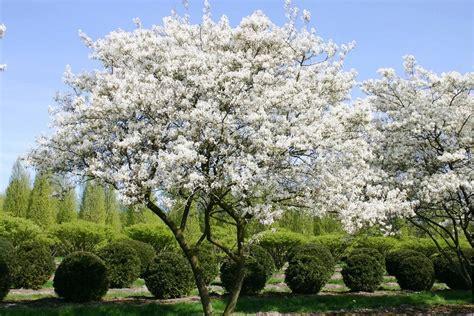 Der Blühende Garten by Individuelle Pflanzkonzepte F 252 R Einen Erstklassigen Garten
