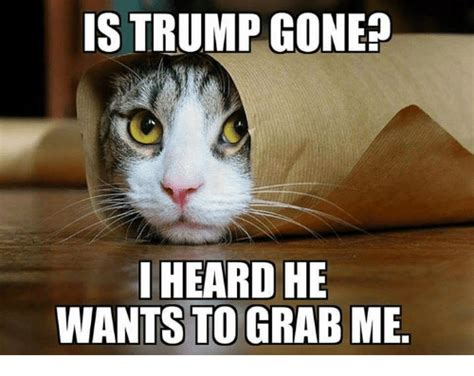Funny Pussy Memes - 25 best memes about trump trump memes
