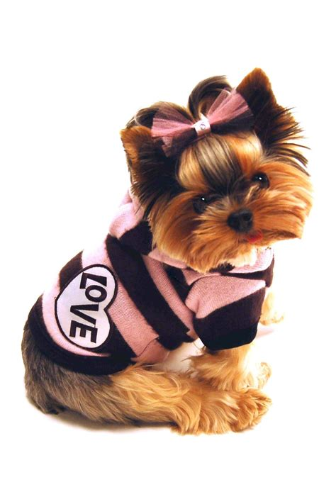 yorkshire terrier puppy dogs yorkie puppy dog clothing