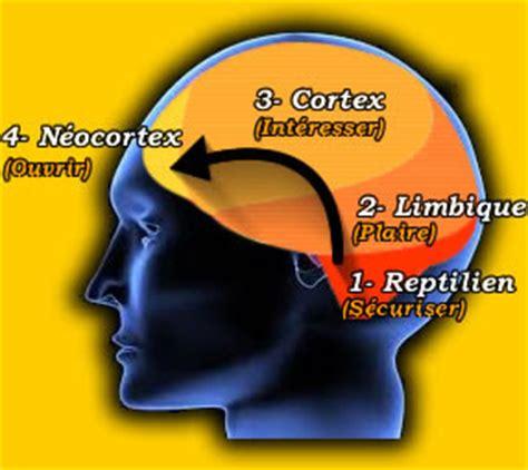 siege tf1 w k p le cerveau reptilien étude