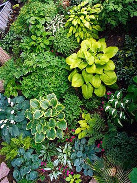 25 best ideas about hosta gardens on hosta