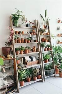 Best 25+ Plant shelves ideas on Pinterest Plant ladder