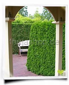 Wann Schneidet Man Thuja : wann pflanzt man eine thuja hecke ~ Lizthompson.info Haus und Dekorationen