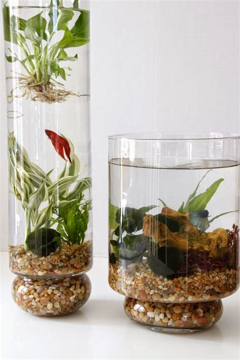 diy indoor water garden tilly s nest