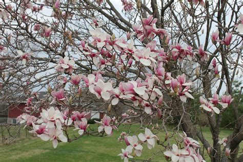tree blooms spring and squiggly things beauty in the midst