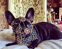 Lady Gaga criticised by PETA for dressing pet dog Asia in ...