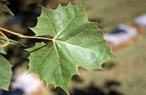 The World´s Tree Species