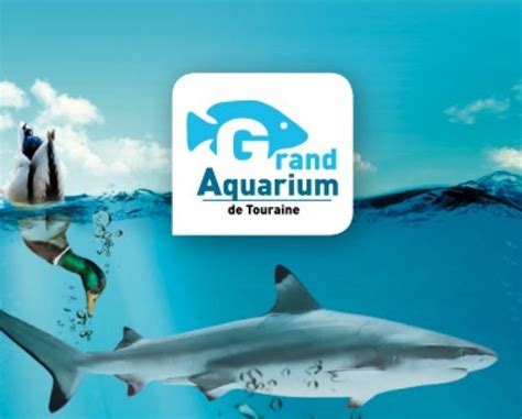 hop on sort visite du grand aquarium de touraine