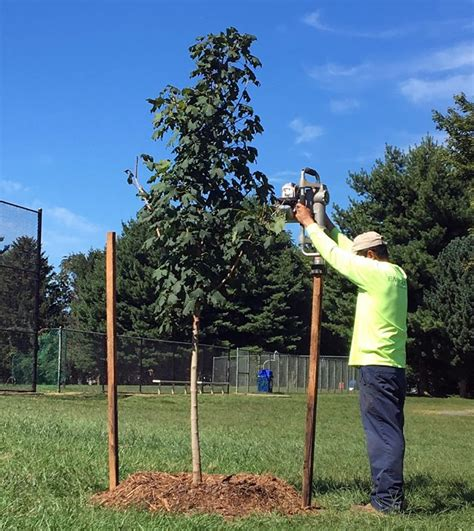 Garden To Grow Going Green Mill by A Focus On Growth Newport Mill Middle School S