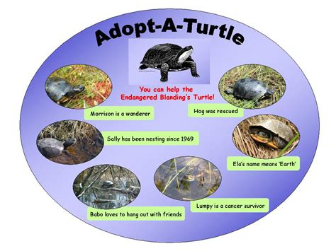 turtle names pin turtle names in different languagesjpg wikipedia the free on pinterest
