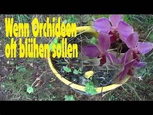 Orchideen Umtopfen Wurzeln Schneiden : pflegeanleitung orchideen r ckschnitt wurzelschnitt w ssern d ngen youtube orchideen ~ A.2002-acura-tl-radio.info Haus und Dekorationen