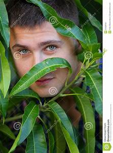 Man Hiding Behind Tree Leafs Stock Photo - Image: 51426167
