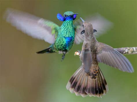 il becco dei colibri   piu  enigma  la scienza