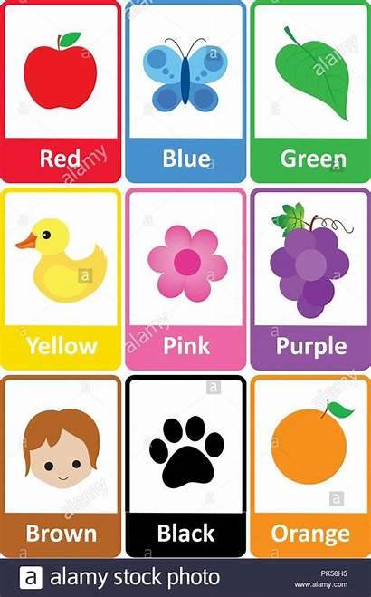 Colors Printable Names Kindergarten Preschool Flash Learn
