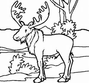 Free Forest Animals Coloring Pages 803, - Bestofcoloring.com