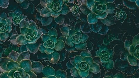 green aesthetic wallpaper hd