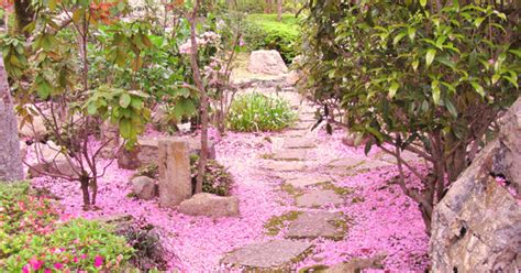 Hanami All'orto Botanico  Roma  Giappone In Italia
