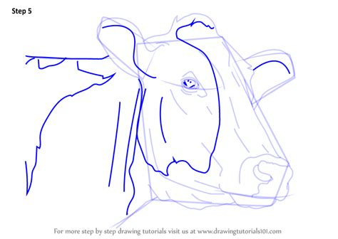 learn   draw   face animal faces step  step drawing tutorials