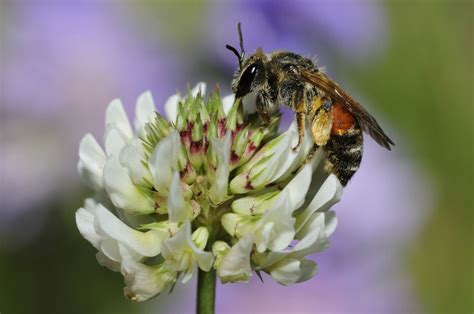 plants  attract bees