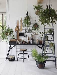 25 best ideas about indoor hanging plants on pinterest for Kitchen cabinet trends 2018 combined with jungle animal wall art