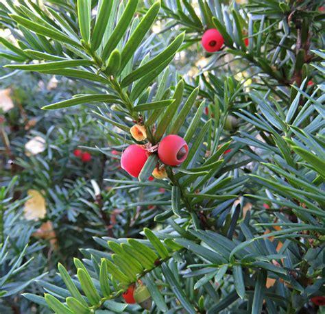 TESTS. Vai pazīsti 11 Rīgas kokus rudenī?   LA.LV