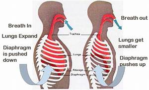 How Does Boyle U0026 39 S Law Affect The Body When Holding Your Breath
