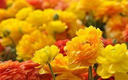 Yellow Flowers Flower Desktop Wallpapers Walldiskpaper