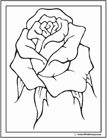 Coloring Rose Pages Printable Single Bud Roses