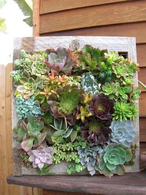 vertical succulent garden framed succulents vertical succulent gardens pinterest succulent frame vertical succulent