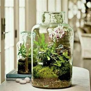 Acheter Terrarium Plante : terrarium dendrobates aquarium ~ Teatrodelosmanantiales.com Idées de Décoration