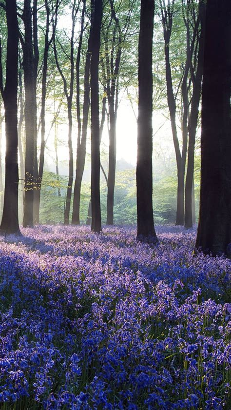 花草风景图片大全唯美-漂亮山水花草风景图片,超漂亮的花草风景图片,世界最漂亮的风景图片,花卉图片大全,图片大全风景清新自然