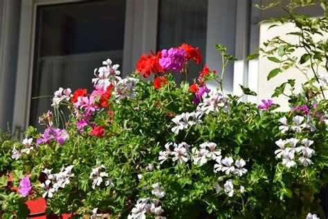 concours de fleurissement clamart habitat