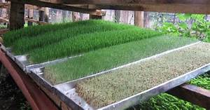 Hydroponics Hydroponic Fodder Farming In Kenya