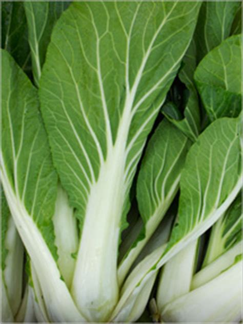 bok choy nutrition selection storage fruits