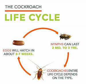Cockroach Facts | All About Roaches | Roach Control