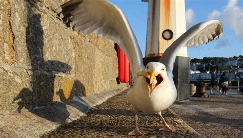 scientifically proven method  stop seagulls stealing