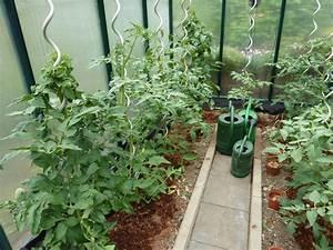 tomaten im gewachshaus schmiddies gartenblog With französischer balkon mit tomaten pflanzen garten