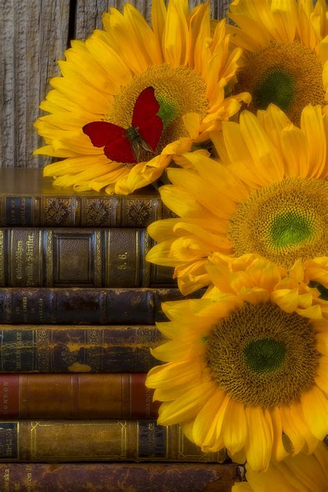 sunflowers   books photograph  garry gay