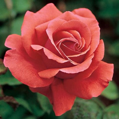 20044 Best A Rose By Any Other Name Images On Pinterest