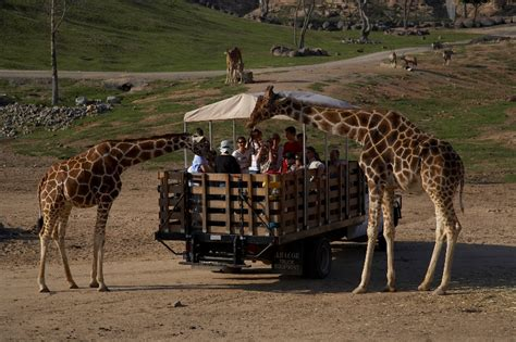 To the San Diego Zoo and Wild Animal Park