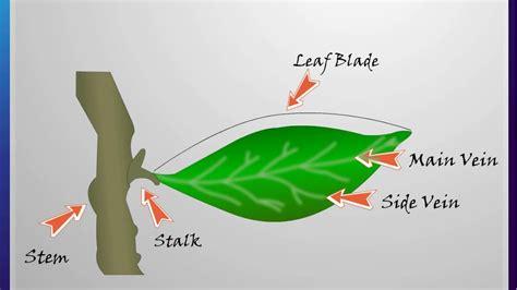 science plants  green friends part  leaf