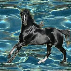 Horses images Black Stallion Run wallpaper and background ...