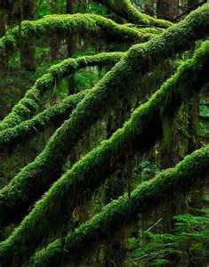 Green Moss Covered Trees