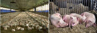 animal husbandry introductionfood production