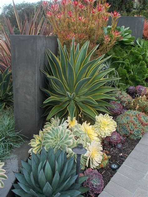 succulent landscapes california gardens and succulents on pinterest
