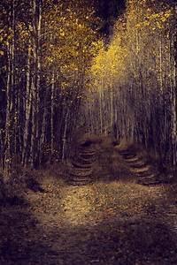 New, Aspen, Trees, Pathway, Road, Fall, Tree, Decor, Colorado, Art, Cabin, Decor, Fall, Aspen, Forest