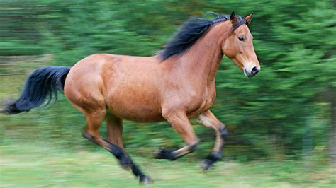 favorite horse names southern living