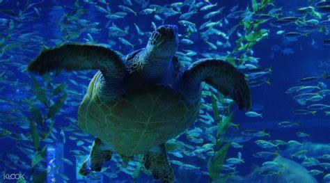 bureau change gare de lyon sea aquarium tickets 28 images s e a aquarium ticket